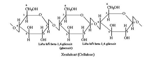 cacbon hidrat 12
