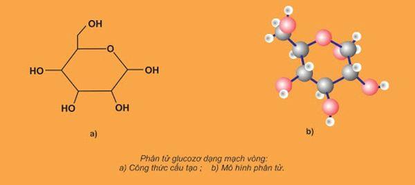cacbon hidrat 2