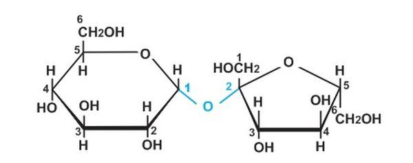 Cấu tạo của các phân tử trong Saccarozơ