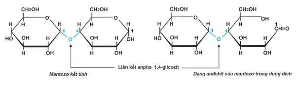 Cấu tạo của các phân tử trong mantozo